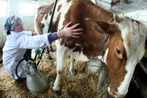 Свиней и коров в Украине стало меньше