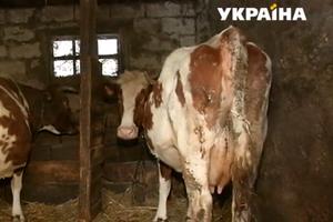 В Украине вводят новые стандарты качества молока: что изменится