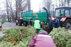 В Киеве утилизировали огромную гору елок