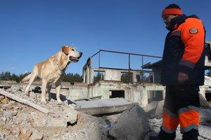 Самые удивительные собаки Украины: Че Гевара спасает жизни, а Граф — актер