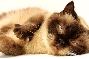 Наглый кот стал звездой сети: курьезное видео