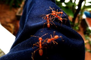 Несколько маленьких существ, встреча с которыми принесет вам много проблем
