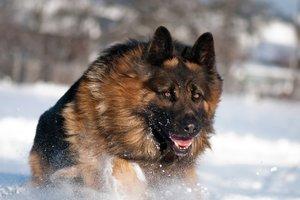 Во Львовской области собаки насмерть загрызли мужчину