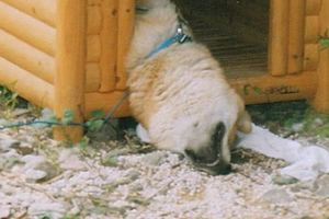 Incredible posture in which animals go to sleep, became a real hit network