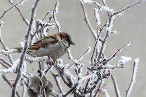 Дыхание Арктики: Украину накроют морозы