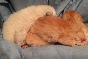 У приюта для животных нашли коробку: то, что было внутри - поразило