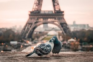 In Paris considered homeless