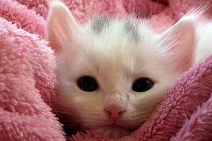 Видеохит: кот, который играет с котенком игрушкой, взорвал Интернет