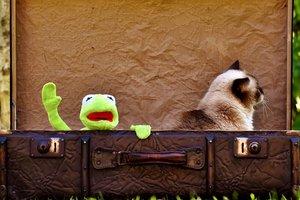 С питомцем за границу: все, что нужно знать о перевозке животных