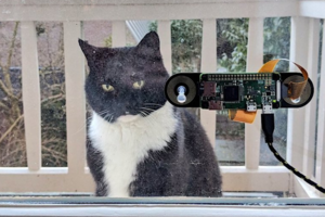 The Dutchman has created a recognition system of the cat