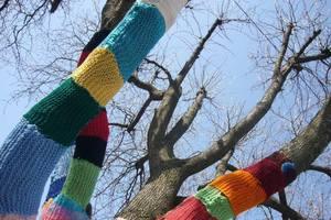 Деревья в шарфиках: украинка создает природные арт-объекты
