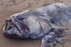 On the beach in Australia found a two-meter fish-monster