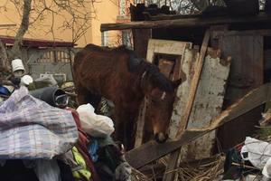 Під Львовом господар морив коня голодом і тримав на вулиці в сніг, мороз і спеку
