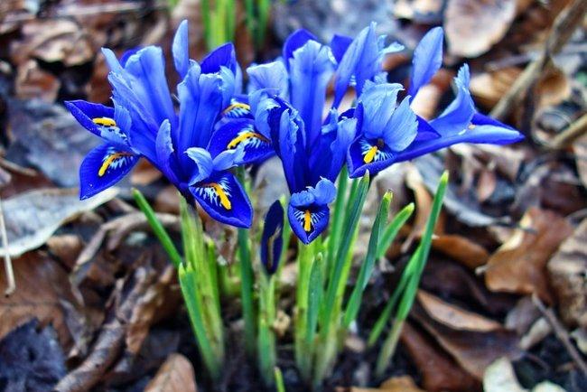 15 марта праздник Photo: какой праздник и все самое важное об этом дне