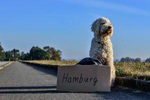 Эксперт рассказал о запретах на ввоз животных в разных странах