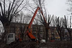 Kiev need to end the sanitary pruning of trees