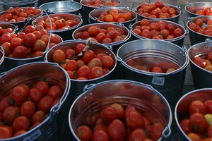 Tomatoes from Belarus aroused the suspicions of the Russian authorities