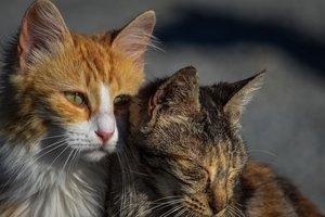 Украина в лидерах по количеству бездомных животных: как это исправить
