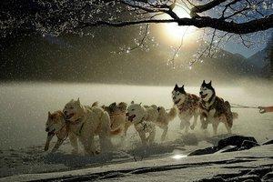 На Аляске прошел забег на собачьих упряжках