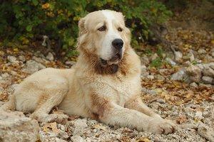 Под Одессой женщине, которую растерзали собаки, ампутировали ногу