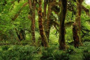 Леса Амазонки будут вскоре стерты с лица Земли