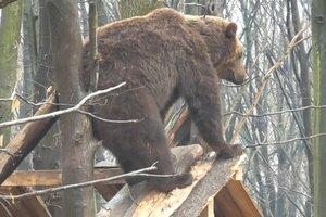 """""""Почешите мне спинку"""": в сети появилось видео, как медведь вышел на """"процедуры"""""""