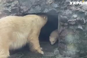 """В украинских зоопарках прошел беби-бум: детеныши уже стали """"звездами"""""""