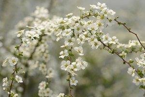 День весеннего равноденствия 20 марта: что это значит