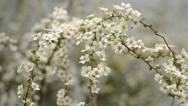Считалось, что именно с дня весеннего равноденствия начинаются обновления в природе. Фото: pixabay