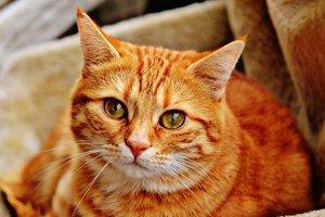 Кот вернулся к хозяину спустя 14 лет разлуки