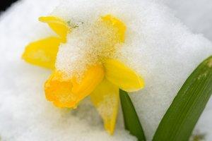 20 марта: какой сегодня праздник