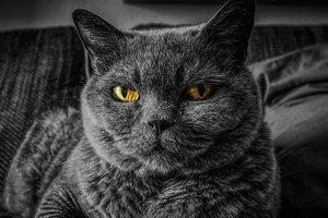 Москвич взял в заложники  у жены 8 кошек