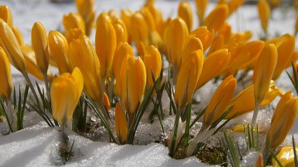 Сегодня – 22 марта. Фото: pixabay