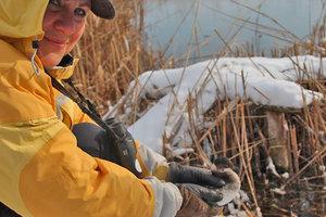 В Одесской области спасли птицу с рубиновыми глазами: потрясающие фото