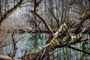 В лесу на Волыни старая осина убила мужчину