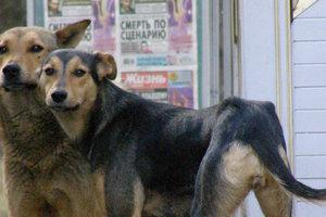В Киеве появятся официальные опекуны бездомных животных