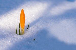 Последние сутки заморозков: синоптики уточнили прогноз погоды до следующей недели