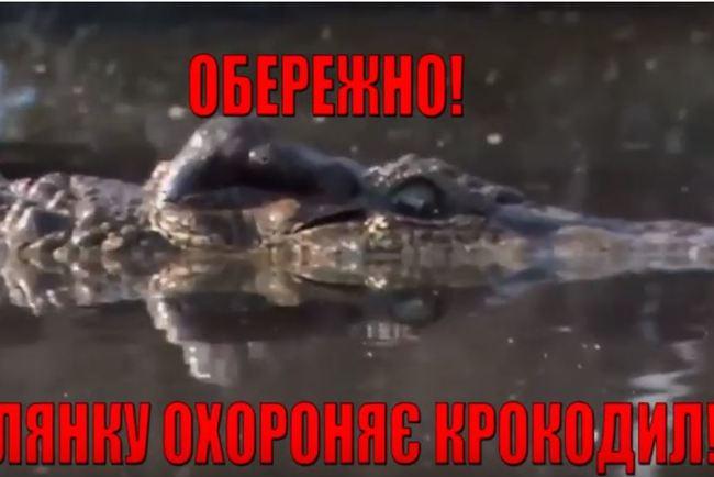 vintazhnoe-video-laska-yaits-devushka-laskaet-kisku-i-vozbuzhdaetsya-etim-video