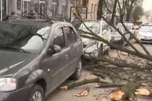 В Киеве упавшее дерево повредило два авто