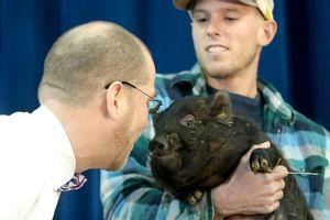 Видеохит: в США директор школы проспорил ученикам и поцеловал свинью