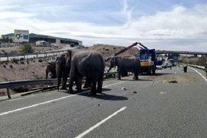 В Испании попал в ДТП грузовик со слонами