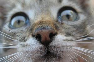 В Мелитополе за убийство котенка мужчину отдали под суд