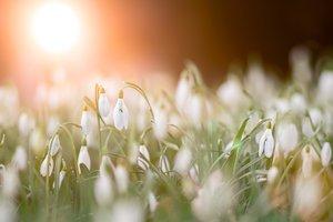 """Весна """"покаялась"""" и согреет Страстную неделю до Пасхи: синоптики уточнили прогноз"""