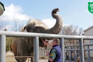Как слон из Киевского зоопарка встречает весну