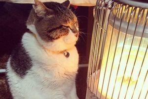 Японский кот влюбился в обогреватель