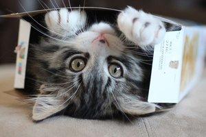 Ученые объяснили, почему коты так любят коробки