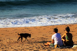 Странное существо вынесло из океана на пляж в Таиланде: первое видео