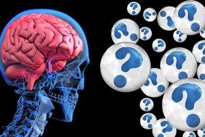 Ученые впервые создали мини-мозг человека с кровеносными сосудами