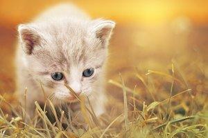 Исследования определили, почему котята такие милые