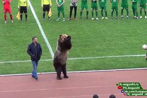 Матч чемпионата России по футболу открыл медведь